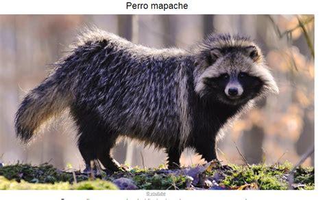 imagenes de animales jamas vistos te ense 241 o 11 animales que jam 225 s hab 237 as visto im 225 genes
