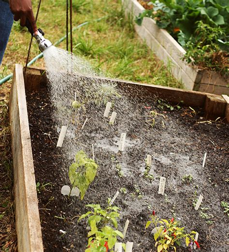 how to avoid overwatering plants helpful tips info
