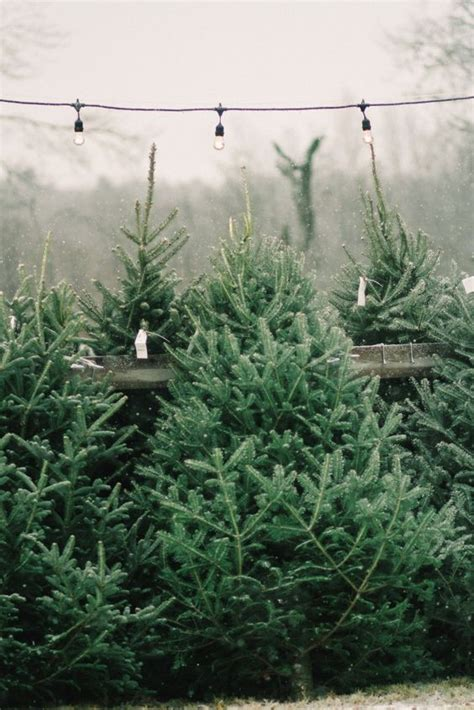 gardens christmas trees and the old on pinterest
