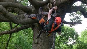 City Of Arborist Being An Arborist Apprentice At Epping Forest