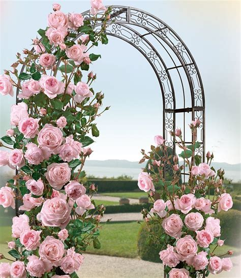 Rosenbogen Garten by Rosenbogen Jamarie Jetzt Kaufen Baldur Garten