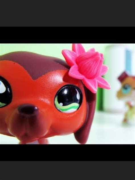 best lps 12 best images about lps savvy on caramel