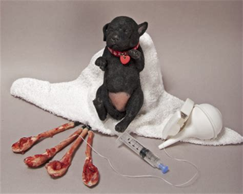 delivering puppies paws 2 claws manikins whelping