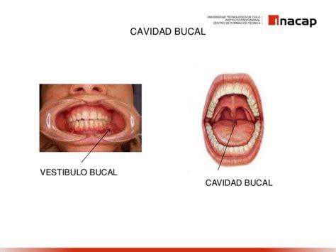 vestibulo oral que es cavidad bucal