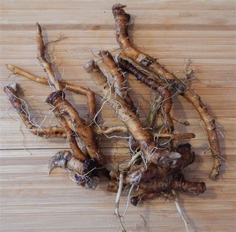 Catchment Detox Hacked by 25 Best Ideas About Dandelion Root Tea On