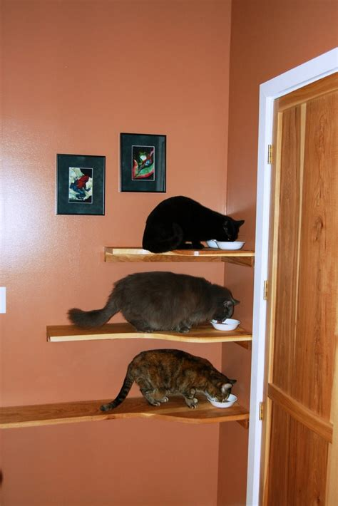 diy shelves for happy active kittens i need to do this for