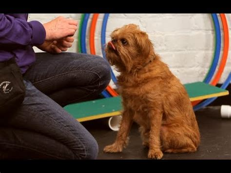how to teach a puppy to stay funnydog tv
