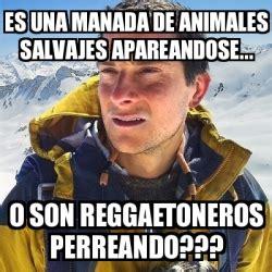 meme bear grylls es una manada de animales salvajes apareandose  son reggaetoneros