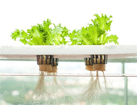 best indoor garden system 17 best 1000 ideas about hydroponic herb garden on