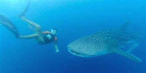 Alat Pijat Ikan Hiu tangkap ikan hiu paus pengusaha ambon terancam bui 6 tahun merdeka