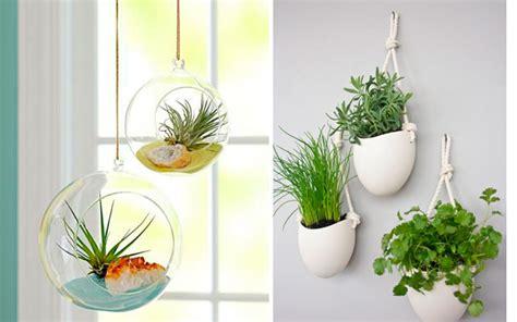 decoracion de plantas ideas originales para decorar la cocina con plantas