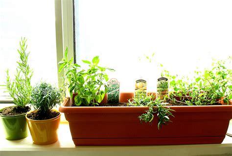 Kitchen Windowsill Herb Garden Grow Your Own Kitchen Herb Garden Kitchen Clan