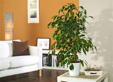 zimmerpflanzen selbstde