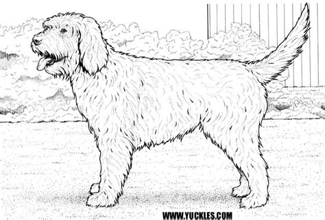 draw doodle coloring free coloring pages of goldendoodle puppies