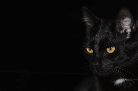 images black  white animal kitten darkness
