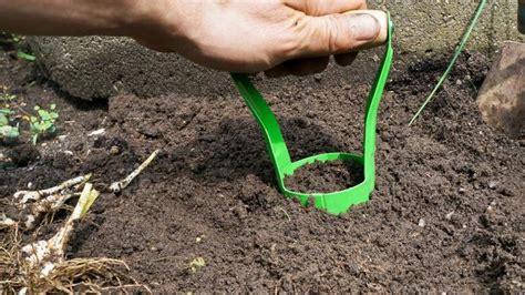 blumenzwiebeln pflanzen blumenzwiebeln pflanzen ausgraben vermehren und