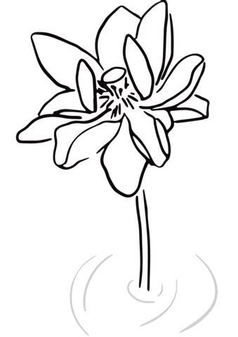 fiore di loto stilizzato disegno di fiore di loto stilizzato da colorare disegni