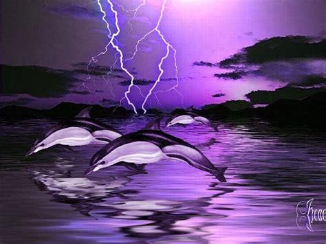 purple dolphin wallpaper www pixshark com images