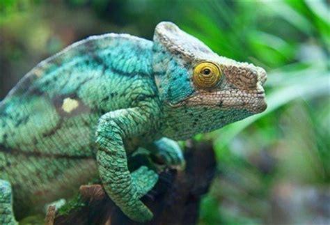 imagenes de animales que se camuflan animales que se camuflan queanimal