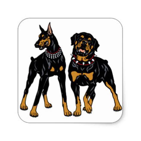 d 243 berman y rottweiler razas caninas rodeadas de mitos