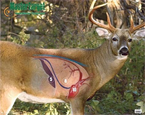 printable whitetail deer targets mastertarget archery whitetail deer target large 22 quot x28