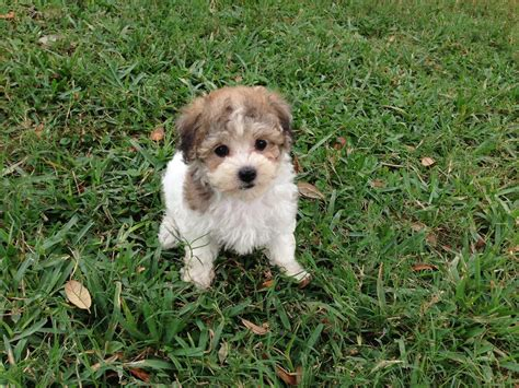 puppy finder florida dogs ocala florida images