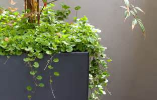 Vertical Gardening Containers - cascading plants better homes and gardens