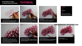 colored pencil drawing tutorial realistic grapes by