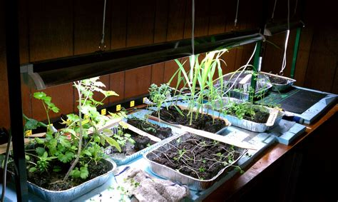 Keys To Lighting Your Indoor Gardening System Gardenerd Indoor Vegetable Garden Lighting