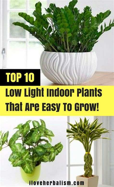 plants that need low light 25 best ideas about indoor plants low light on pinterest