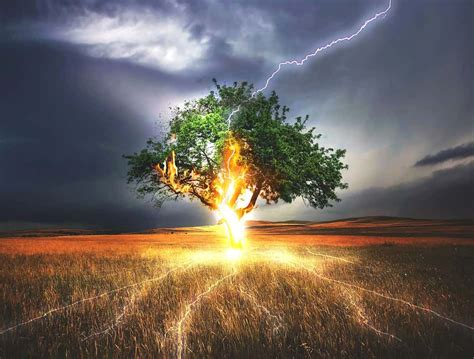 why does lightning sometimes cause trees to explode