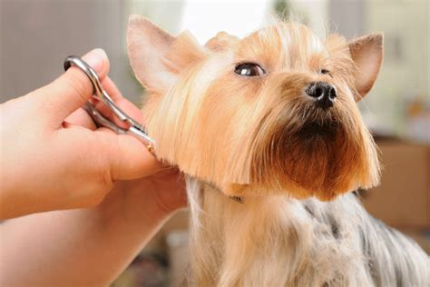 how much to tip a groomer do i need to tip a groomer if so how much unleashed