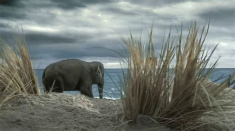 spiriva commercial elephant actress who is the actor in the geico tarzan commercial black