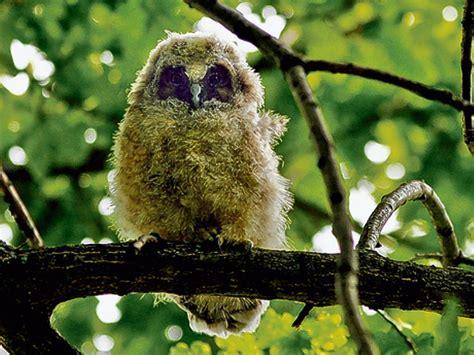 Britzer Garten Greifvogel leben der greifv 246 gel britz