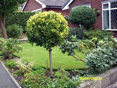 small backyard trees ornamental trees for small gardens australia garden