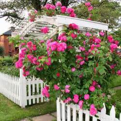 Professional Landscape Design Software by Design Your Own Rose Garden Www Coolgarden Me