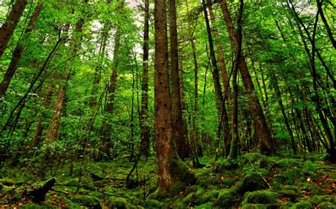 top 10 countries with largest forest area land in the world