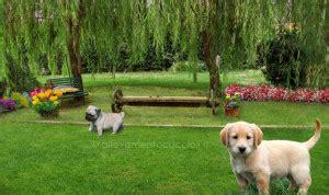 pensione cani pavia pensione per cani pavia anche gatti