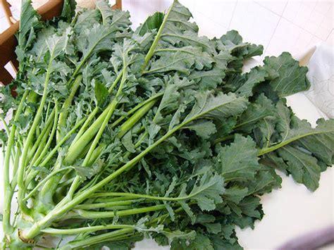 broccoli come si cucinano fantasia in cucina broccoli di natale con papaccelle all