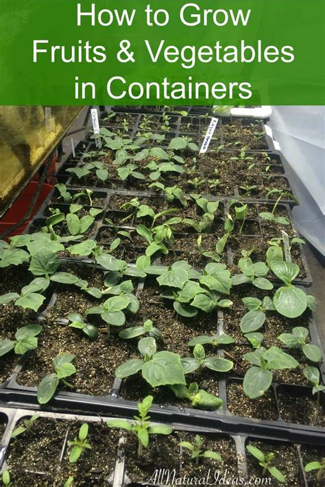 vegetables grown in how to grow fruits and vegetables in containers all