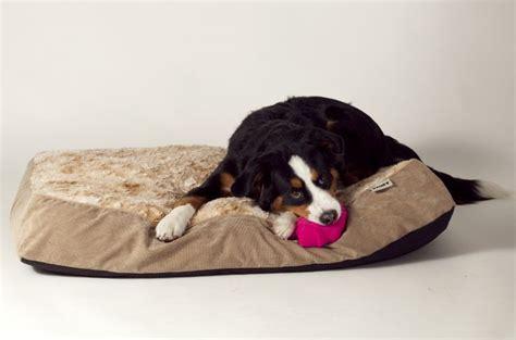 stuft pet bedding 69 best pets spring for sprong images on pinterest