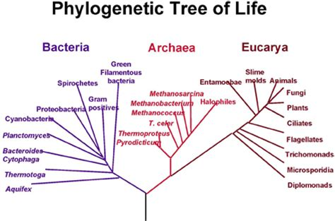 reconstructing the tree of life   plus.maths.org