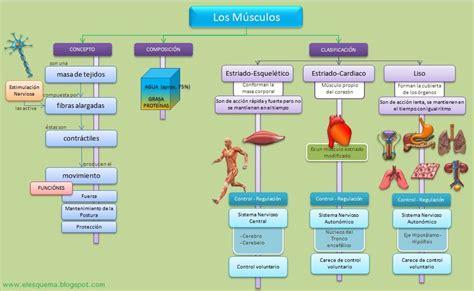 clasificacion de las cadenas musculares pdf musculos anatomia pinterest m 250 sculos mapa