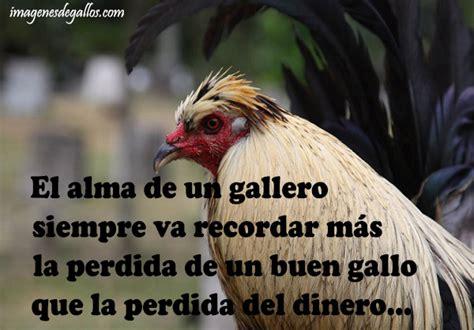 imagenes gratis de gallos con frases imagenes de gallos finos con frases de un gallero