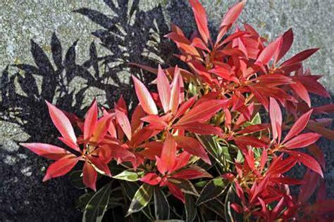japanische pflanzen winterhart japanische pflanzen winterhart gartenarbeit im dezember
