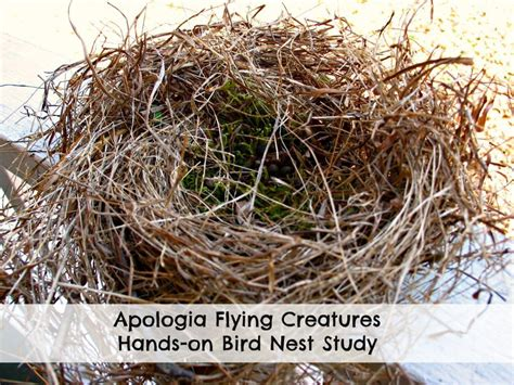 apologia flying creatures bird nest study live and learn