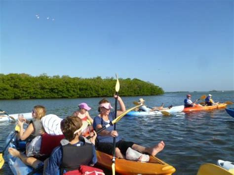 sw boat tours in florida the top 10 things to do near design your gift bonita springs