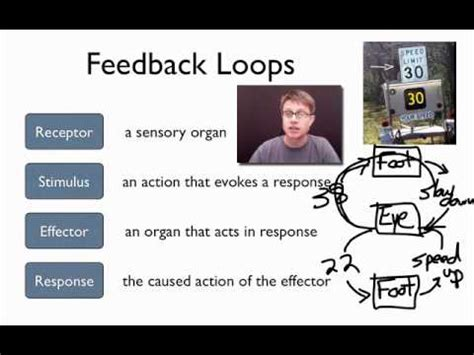 elements of a feedback loop youtube