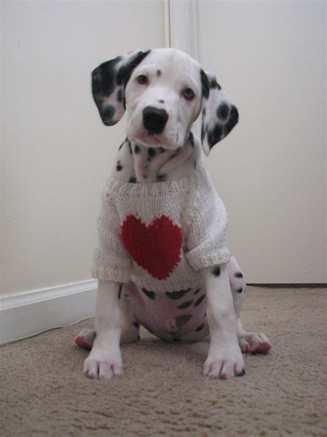 valentines puppy saved by dogs s day and the one you