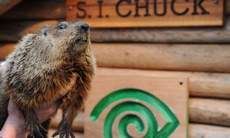groundhog day staten island zoo groundhog day six more weeks of winter phil not so fast